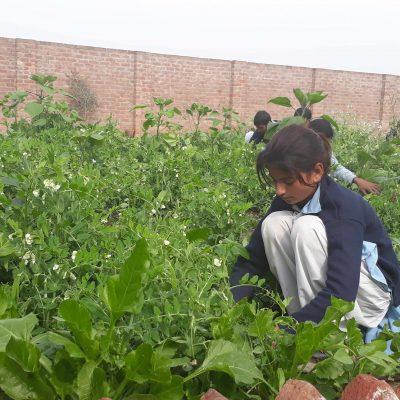 Girl-agroecology