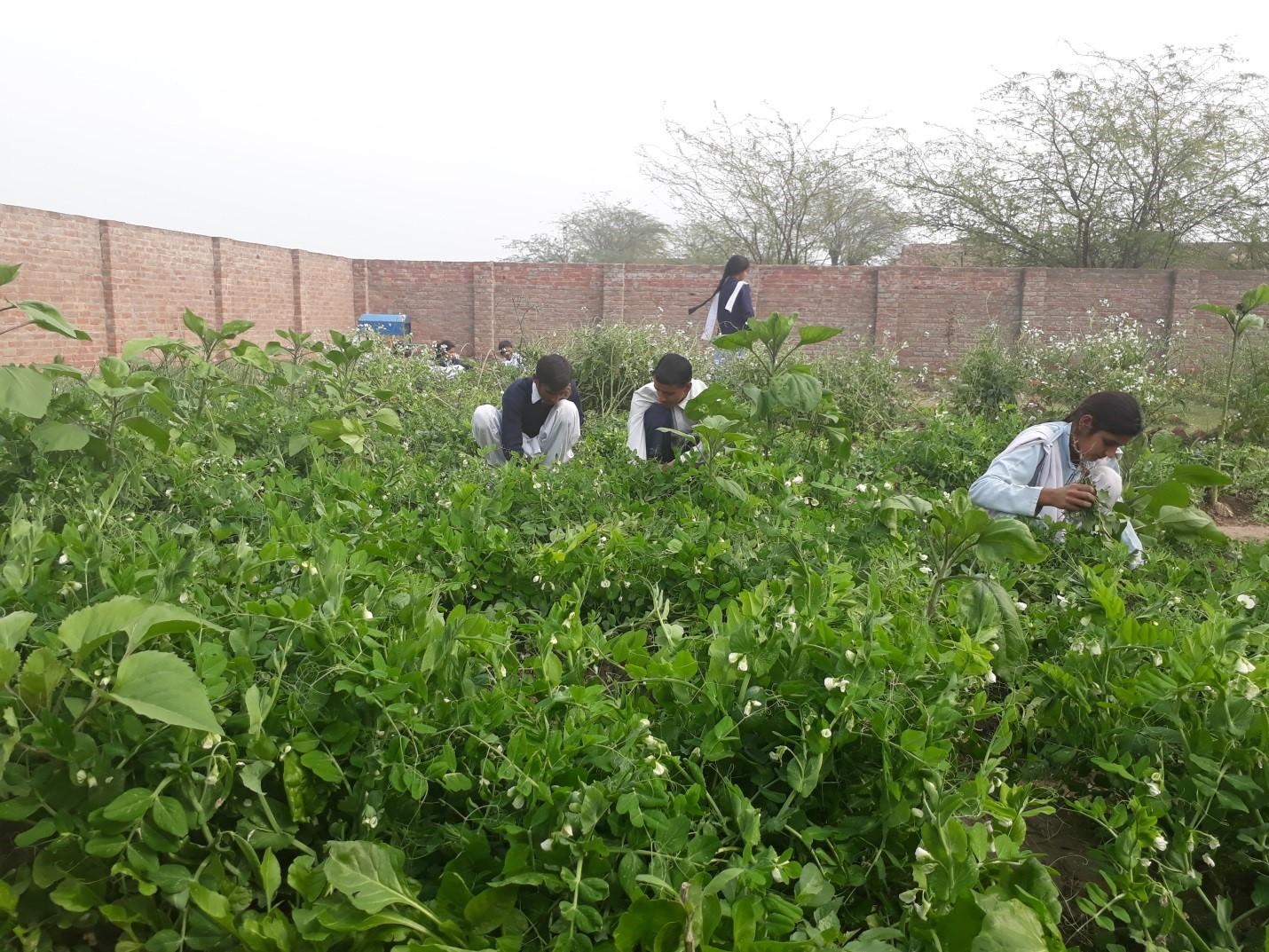 From Garden to Lab – By Nasira Habib